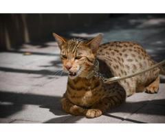 penitipan kucing di pakuwon city